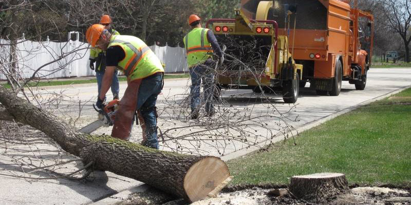mchenry tree services